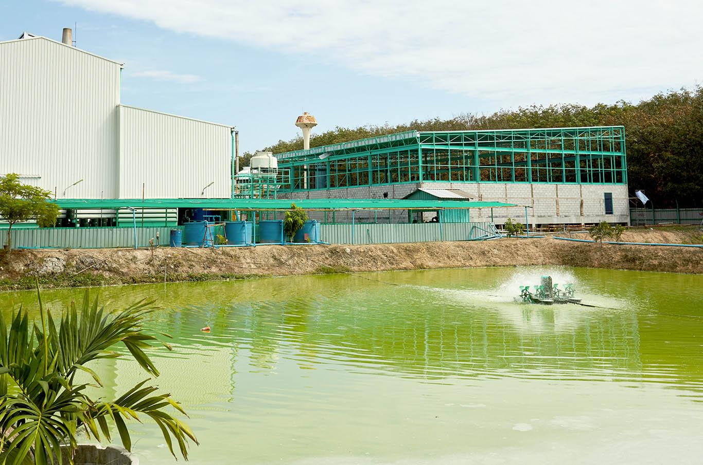 Sustainability, water treatment facilities, biomass boilers, palm kernels, water treatment plants, environment friendly, green, sustainable การพัฒนาอย่างยั่งยืน, บ่อน้ำเสีย, บ่อบำบัดน้ำเสีย,boiler ชีวมวล, ระบบบำบัดน้ำ, ระบบบำบัดน้ำอุตสาหกรรม